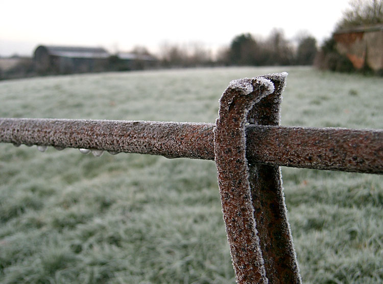 Frost on a Fence in Devon, December 2009